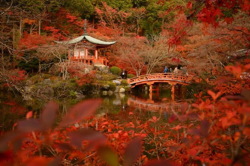 Kyoto Colores de Otoño